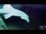 2007 | BBC: Дикие Карибы | Wild Caribbean | Рифы и затонувшие корабли - 02|04